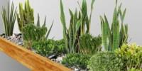 Композиране на растителност в клоц