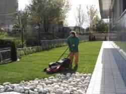 Поддръжка тревен килим